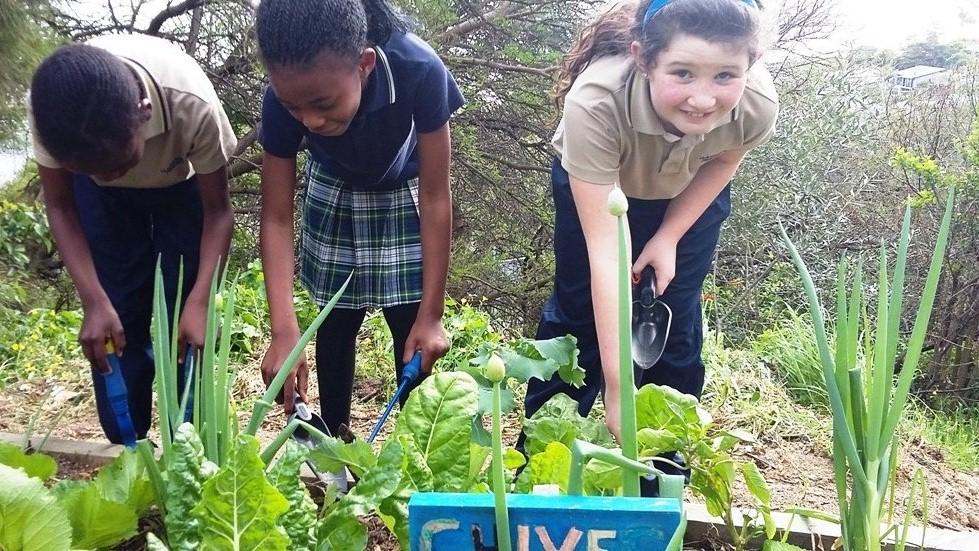Envirochild Hout Bay Green education eco-clubs Planet Warriors school education